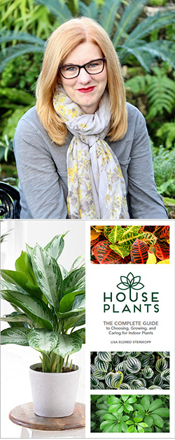 Lisa Steinkopf, The Houseplant Guru