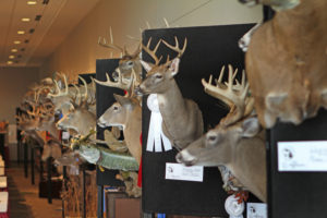 The State's Best Taxidermy