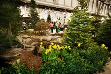 Feature Center Garden