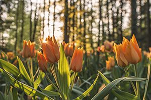 West Michigan Home & Garden Show Photo Contest
